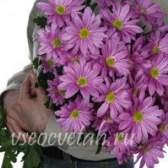Квіти-мандрівники