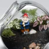 Фиттония - флораріум або сад в пляшці