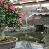 Як садити камелії в саду троянди