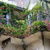 Як влаштувати зелений сад на власному балконі