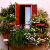 Які квіти посадити на балконі: підбираємо садові рослини для оформлення балконів різного ступеня освітленості