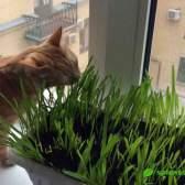 Кот-квітникар: про зелені вітамінах для котів і кішечок
