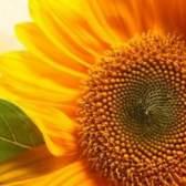 Лікування жовтим кольором