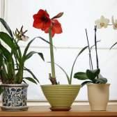 Незвичайні декоративно-листяні рослини для дому