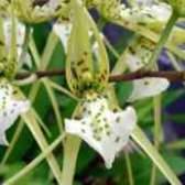 Орхідея догляд в домашніх умовах
