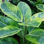 Добрива для декоративно-листяних рослин