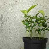 Добрива для кімнатних рослин