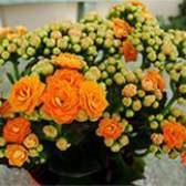 Добрива для красивоквітучих рослин