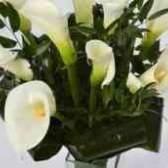 Замовлення квітів кали купити
