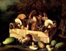 Класифікація грибів і визначення їх доброякісності
