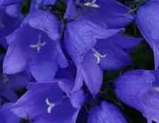 Дзвіночки квіти анімація картинки