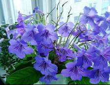 Кімнатні квіти і жіноче щастя