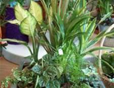Композиції з домашніх рослин