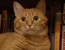 Кот-квітникар: отруйні і шкідливі домашні рослини для кішок