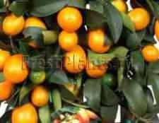 Купити цитрусове дерево в москві