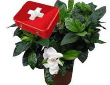 Невідкладна допомога кімнатним рослинам
