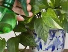 Обприскування домашніх рослин