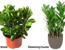 Прикмети, пов`язані з кімнатними рослинами