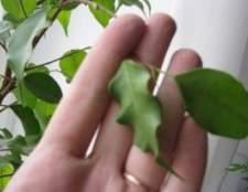 Найпоширеніші хвороби кімнатних рослин