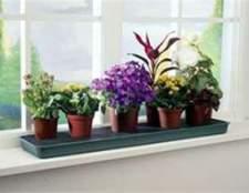 Поради по розміщенню рослин в будинку