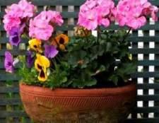 Температурний режим для кімнатних рослин