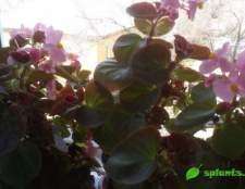 Вологолюбні кімнатні рослини