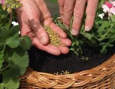 Цілюща сила підгодівлі для кімнатних рослин